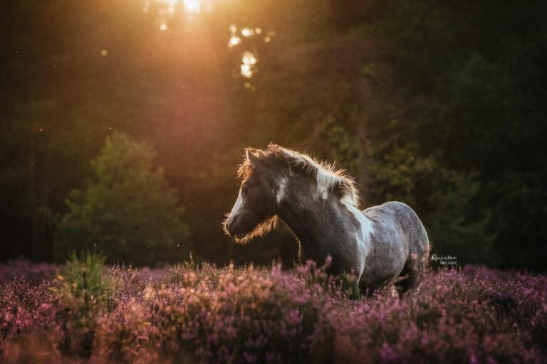 Paarden fotografie Gelderland Brabant