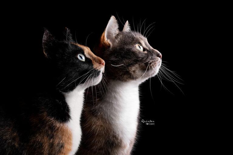 Studiofotografie katten fotoshoot